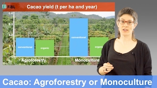 Cacao agroforestry systems compared to monoculture:  Yields and return on labor