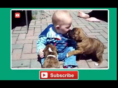 Best Baby and Dog Video Compilation 2016 Funny Baby Videos