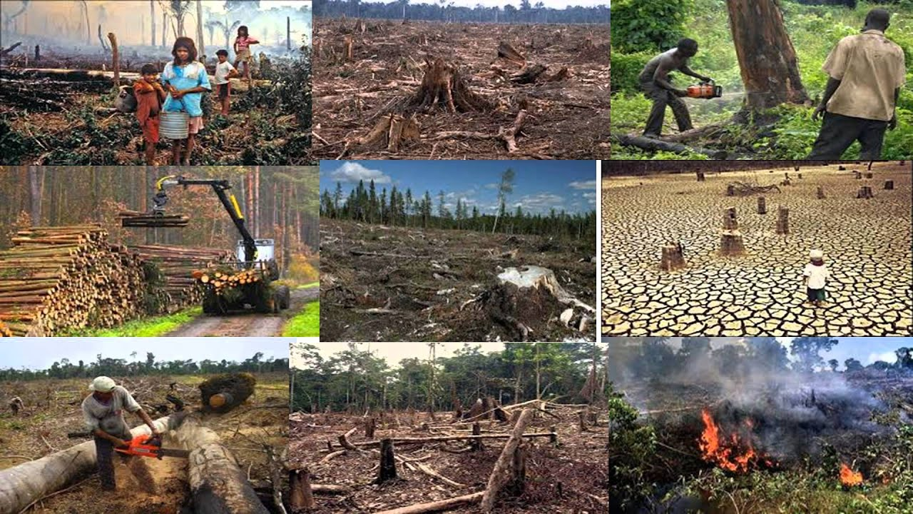 the effects of man on the land and environment