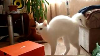 смешные коты  Кот красиво ушёл
