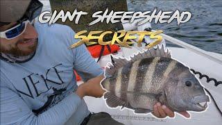 SHEEPSHEAD STAMPEDE!!  -  Tips & Tricks For TROPHY SHEEPS