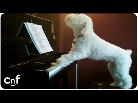 Dog Plays Piano and Sings