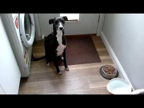 Dog Feeding Time