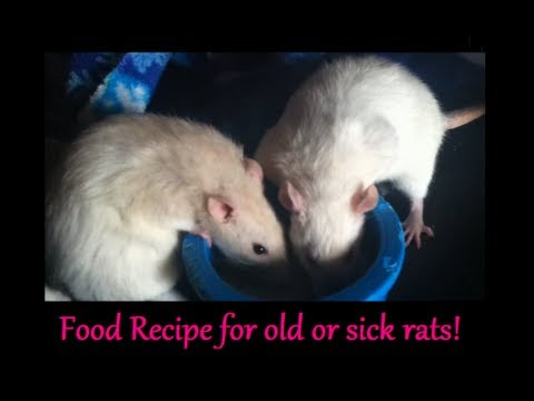 All about rodent poison in pets with emphasis on ...  Rat Vomit