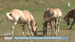 ANIMAUX & NATURE : En Normandie, le lait de jument se fait une place