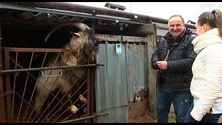 Волки, павлины и пиренейский горный козёл: необычный зоопарк завёл фермер под Минском