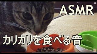 食べ物を食べるときの咀嚼音動画が流行っているので犬でやってみた(ASMR)
