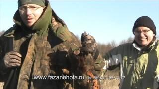 Охота на фазана в Воронежской области видео