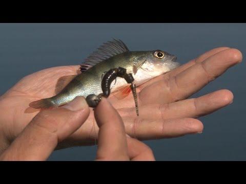 Ловля карася и белой рыбы на Поплавочную Удочку. О Рыбалке Всерьез видео 31.