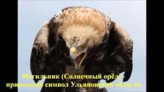 Красная книга  Птицы России