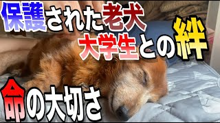 【涙腺崩壊】白内障の保護犬と大学生の1日に密着したら感動が待っていた〜老犬との絆、次回動物愛護センターへ〜(大学生YouTuber)