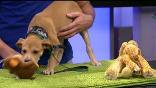 Pets on Parade - 09/12/15