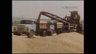 1990 год. Жатва: проблемы на полях Куйбышевской области.