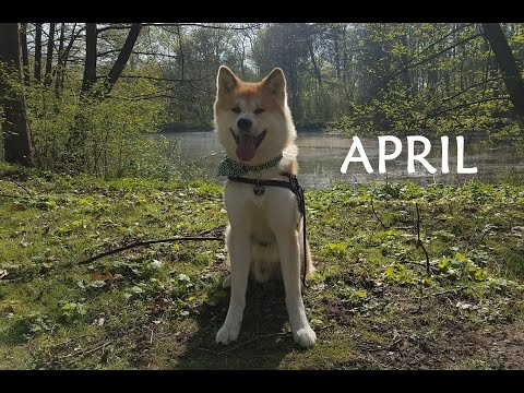 Akita Inu - April Story ()