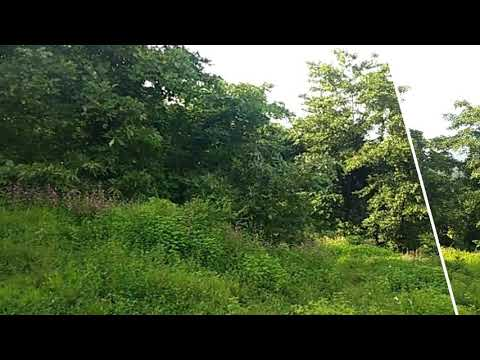 Agricultural Land sale in mandangad 4.5 Acres