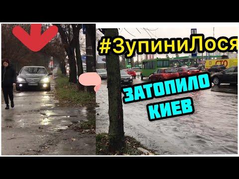 🦌 #ЗупиниЛося: Киев