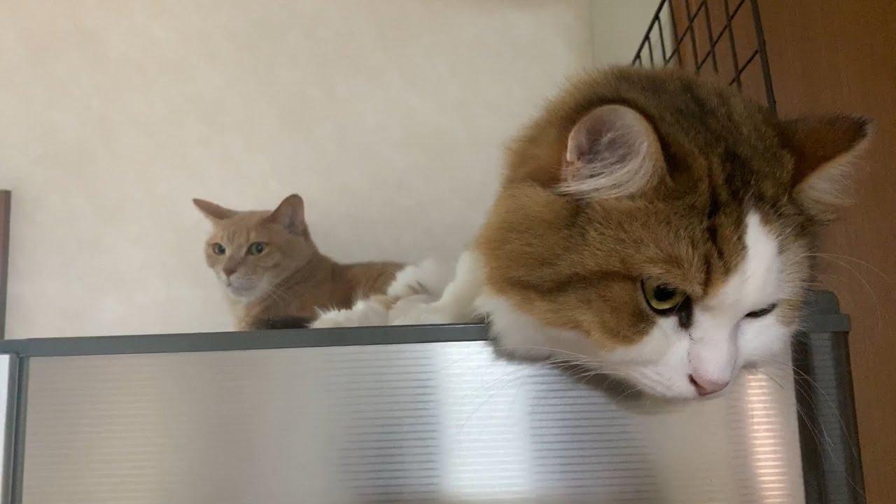 ジワジワと近づく猫