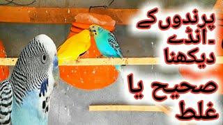 BIRDS KAY EGGS CHECK KARNE CHAHIYE YA NAHI | URDU/HINDI