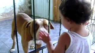 ataque de pit bull feroz a criança rssrs
