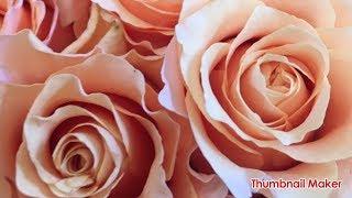 YouTube Captureから 【叶姉妹】 ヘブンリーな夜と✨ ローズの愛の香りを...