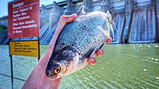 I CAN'T BELIEVE We Caught This In A MASSIVE Spillway!!! (SURPRISING)