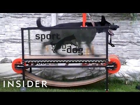 Dog Treadmills Help Keep Pups Fit