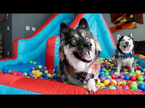 Kakoa's Giant Ball Pit Bounce House Surprise!