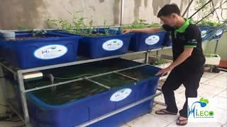 Gambar cover Aquaponics hệ thống tự trồng rau xanh cá sạch, mô hình tự trồng rau nuôi cá Aquaponics- HIECO
