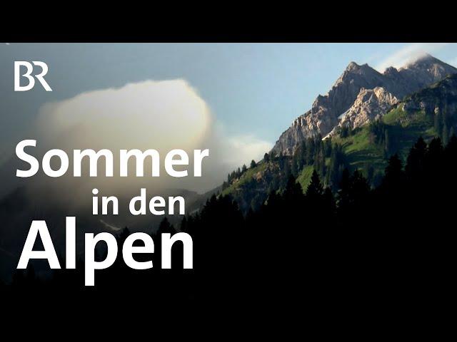 Alpine Jahreszeiten: Der Bergsommer in den Allgäuer Alpen | Bergauf-Bergab | BR