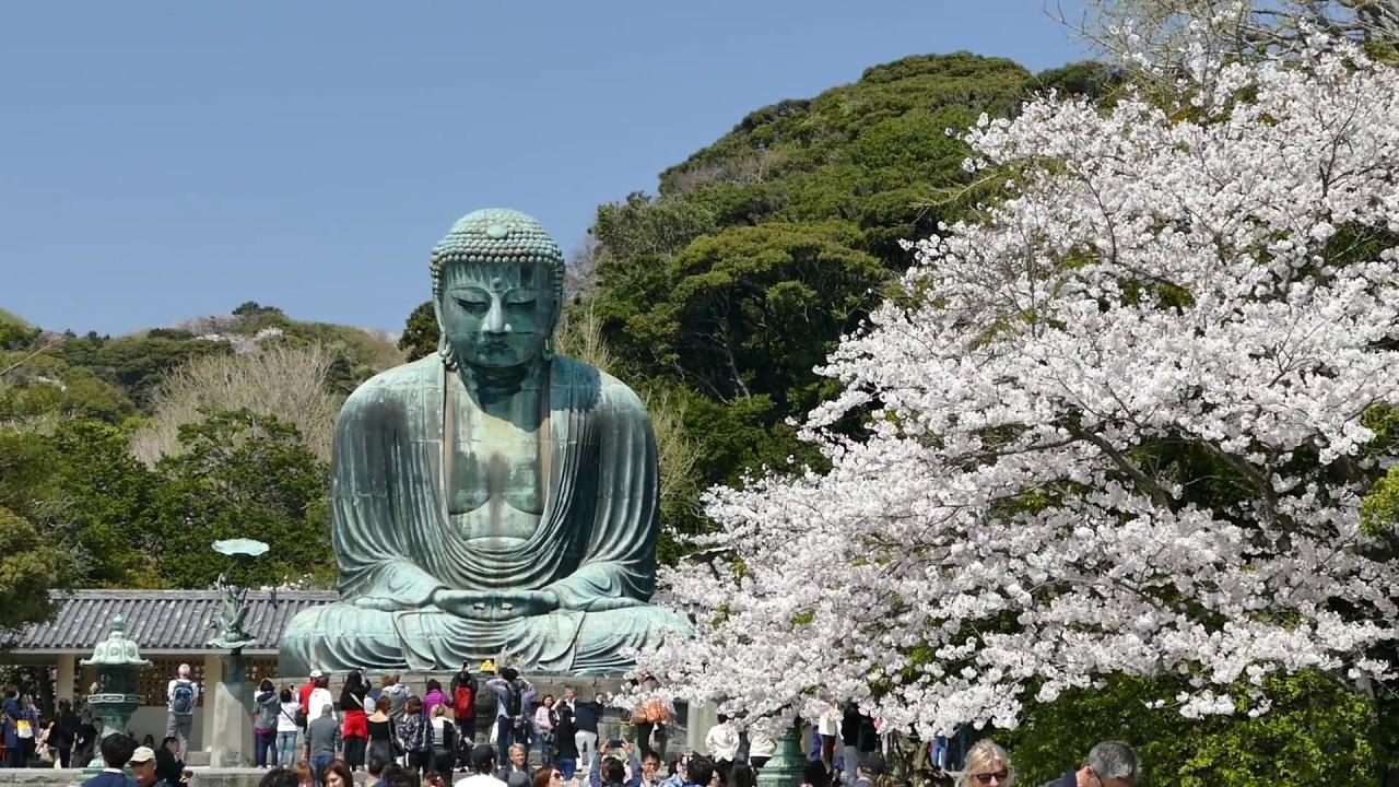 Kotokuin (Great Buddha of Kamakura) - Picture of Kotoku-in (Great ...