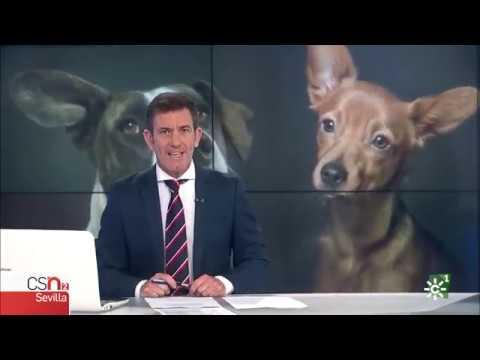 ¡Dogtour en la televisión Andaluza!