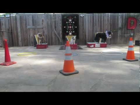 Canine Circus School Warm Up Routine