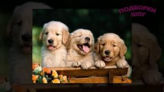 ТОП ЩЕНОЧКОВ! Милашные щенки в подборке фото. Для детей и взрослых
