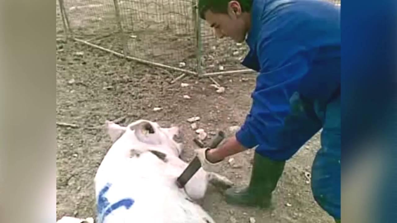 Juicio a los maltratadores de la granja El Escobar