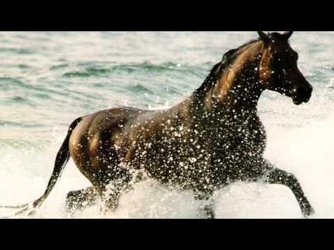 Wild Horses~Natasha Bedingfield Lyrics