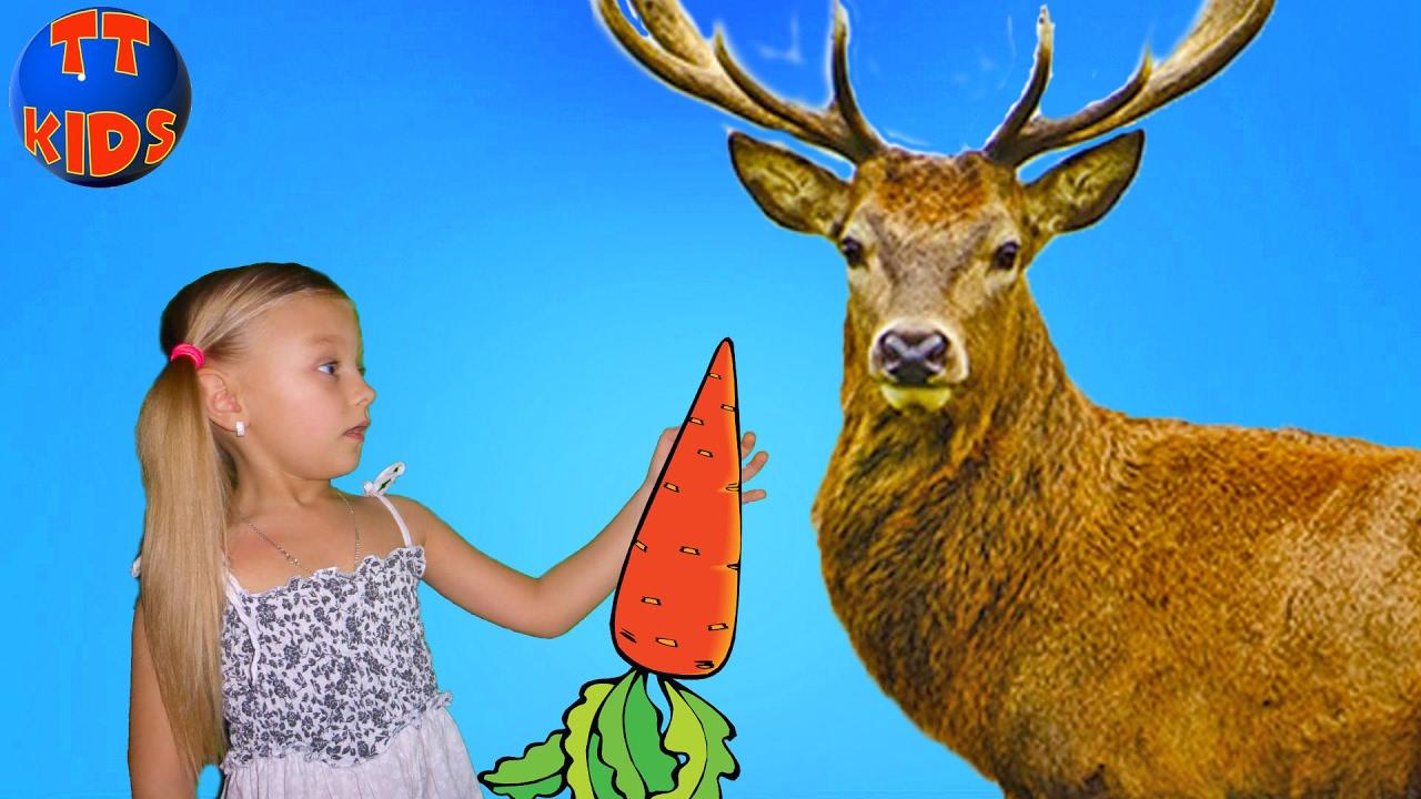 Обычная еда для животных | ВЛОГ Путешествие в Зимний зоопарк | Видео для детей