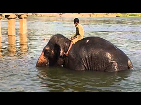 Laxmi, the temple elephant, gets her daily bath.