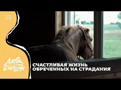 Центр реабилитации «Светозар»: хоспис и детский сад для лошадей   КОТ