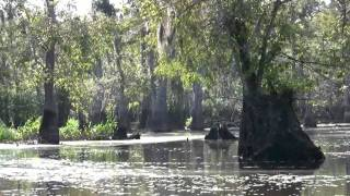 Louisiana Bayou-The Honey Island Swamp.mp4
