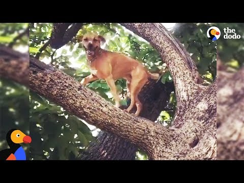 Dog Climbs Trees To Overcome His Anxiety  RINGO  The Dodo