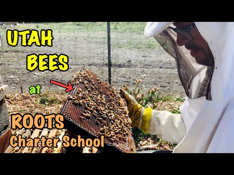 STRONG Utah BEES at Roots Charter High School - I almost fall off mountain trail during hike!!!