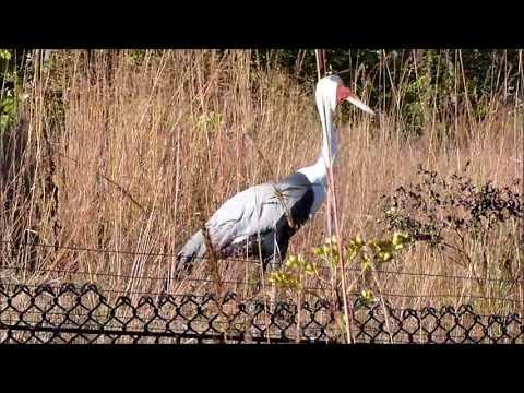 Crane Video - Baraboo Wisconsin