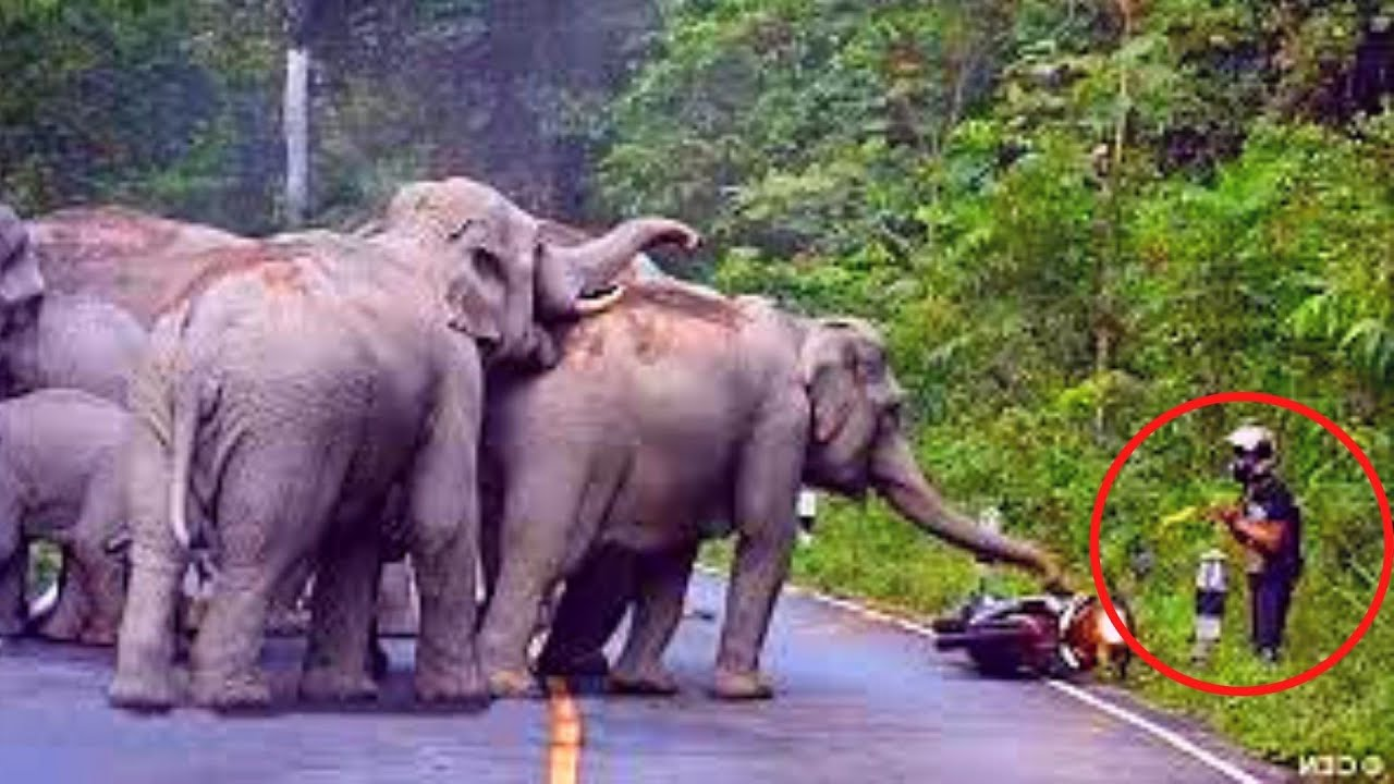 10 Elephant Encounters That Make Me Uneasy