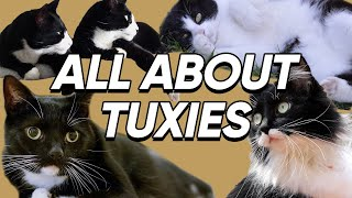 Fun Facts About Tuxedo Cats That We Bet You Didn't Know!