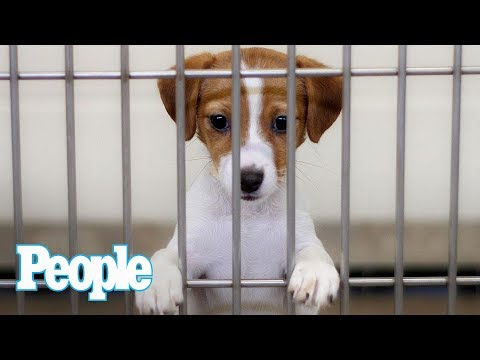 Dr. Evan Antin Answers: What Should I Know Before Adopting A Shelter Dog? | Pets | People