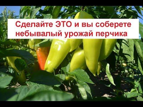 Как увеличить урожай перца// Формирование перца// Удобрение для перца