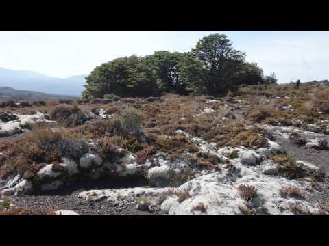Tongariro Trail, New Zealand  video w/still Pictures