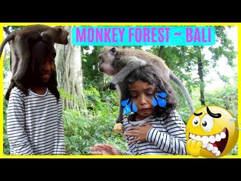 DIKERJAIN MONYET LUCU DI BALI ♥ VLOG FUNNY MONKEY VIDEO