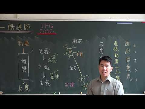 【潘彥宏老師】基礎生物(上) 27 | 第三章動物的構造與功能  第五節 感應與協調
