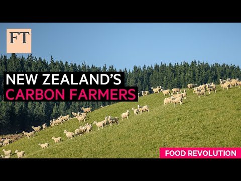 Carbon farming: fighting New Zealand's agricultural emissions   FT Food Revolution